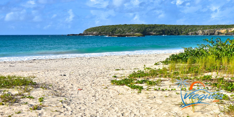 Fun Vacation Guide To Vieques Island Caribbean